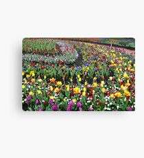 Colourful Curved Tulip beds Canvas Print