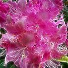 Rhododendron by Lynn Bolt