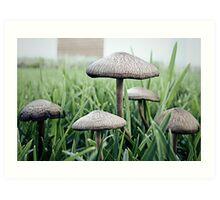 Mushrooms x5 Art Print