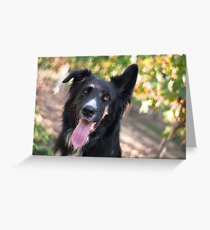 The star of the show Greeting Card