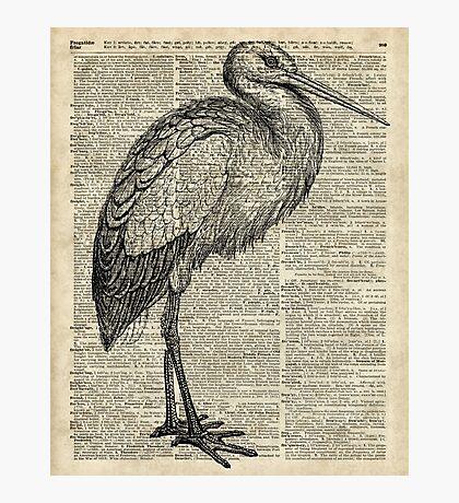 Stork Wild Bird Vintage Ink Illustration Encyclopedia Collage Photographic Print