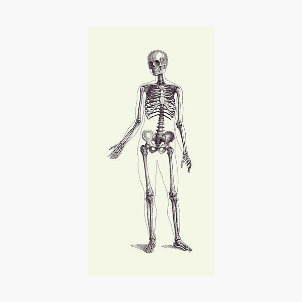 Human Skeletal Muscular Anatomy Print Biology decor Skeleton Bones and Muscle Medical Student