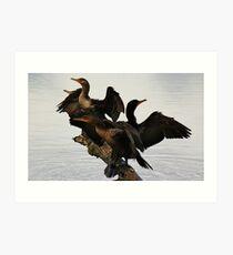 Cormorants Art Print