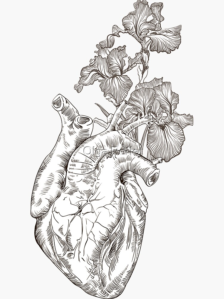 drawing Human heart with flowers  von OlgaBerlet