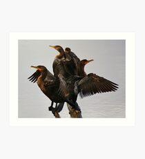 Beautiful Cormorants Art Print