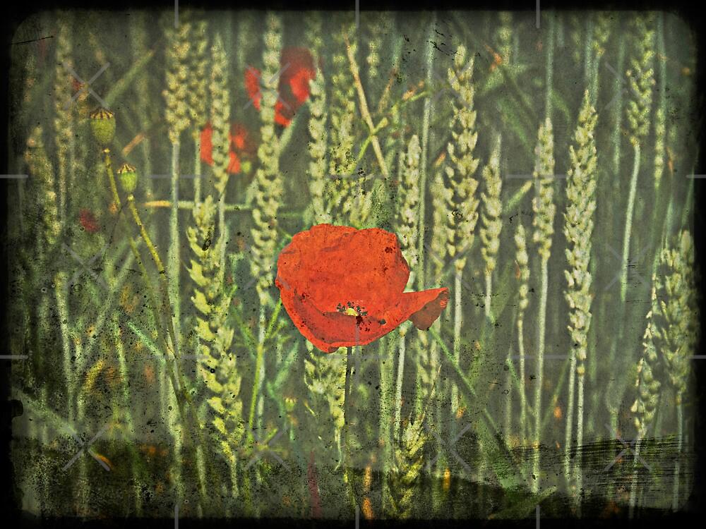Poppy Love by Denise Abé