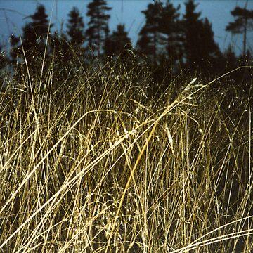 Tall Grass - Markaryd, Sweden by Barnewitz
