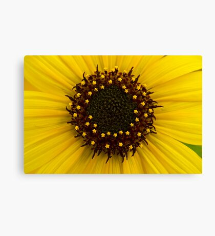 Southern Idaho Sunflower Canvas Print