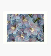 Delphinium Blooms Art Print