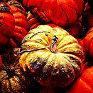 Pumpkins by Benjamin Sloma