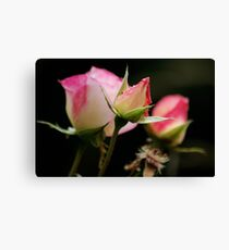 Life of a Rose Canvas Print
