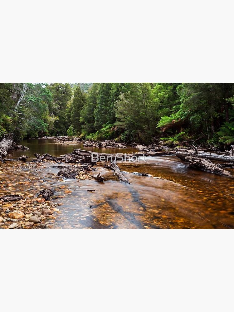 Styx River - Tasmania by bcshort