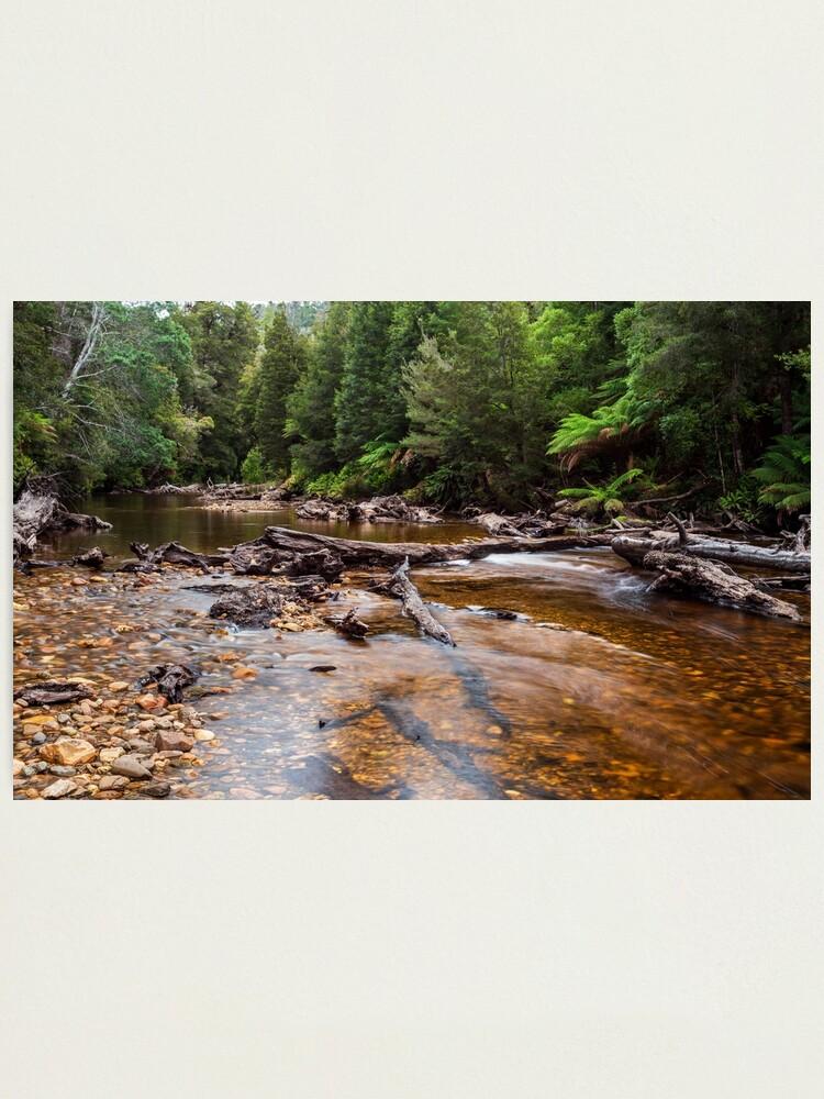 Alternate view of Styx River - Tasmania Photographic Print