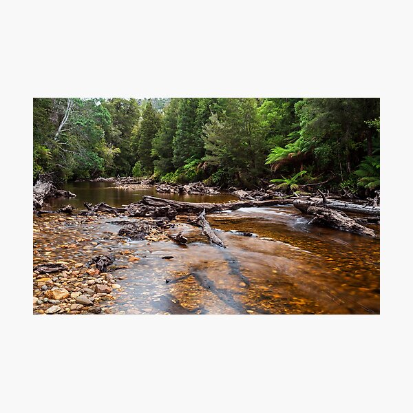 Styx River - Tasmania Photographic Print
