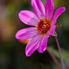 Pretty in Pink by Ray Clarke