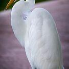 Egret Profile by George Lenz