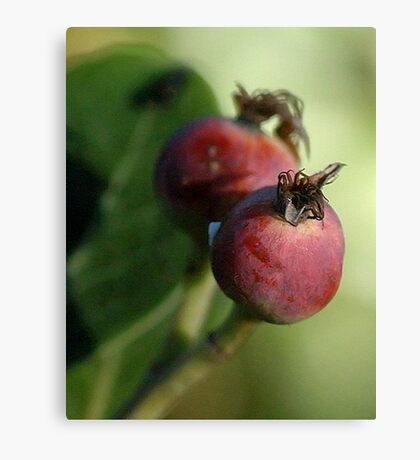 The Ripening Canvas Print