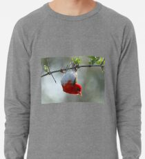 Red headed weaver bird Lightweight Sweatshirt