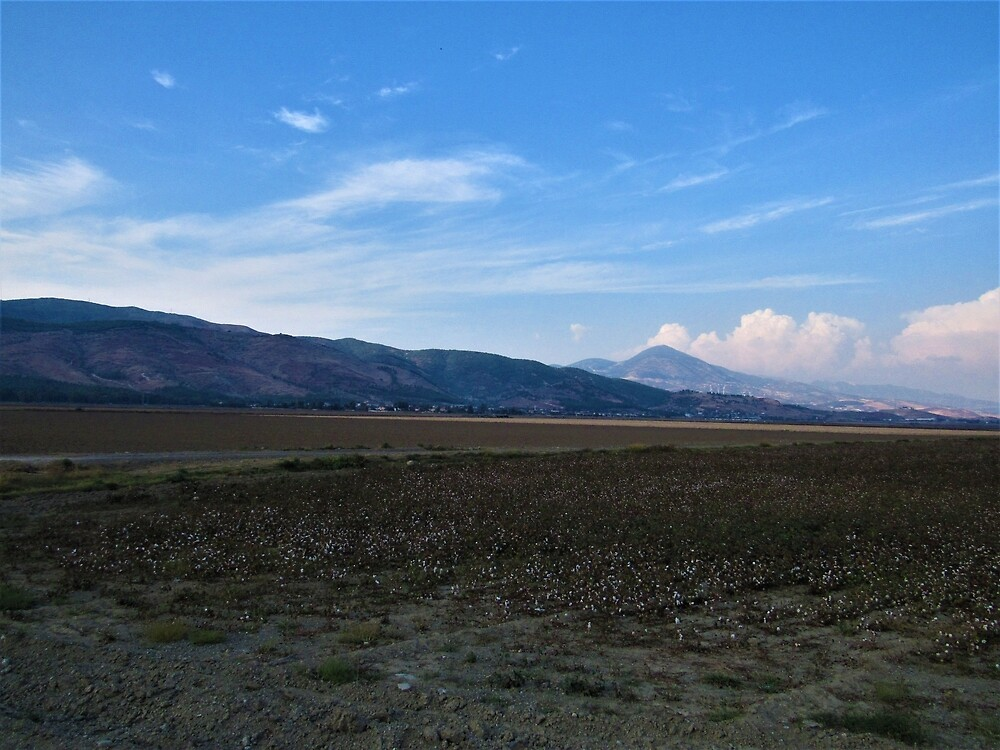 Cotton Field to Nur Mountains by tomeoftrovius