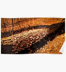 Autumn Forest Scene - Fall Time - Tree Log with Fungi & Mushrooms in Sunlight Poster