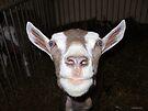 Goat Portrait by Barberelli