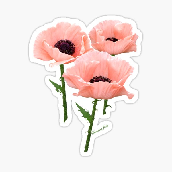 When You Say Nothing At All~ Poppies Sticker