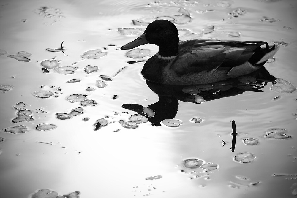 Duck reflection by Esther  Moliné