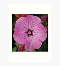Pink Striation Art Print