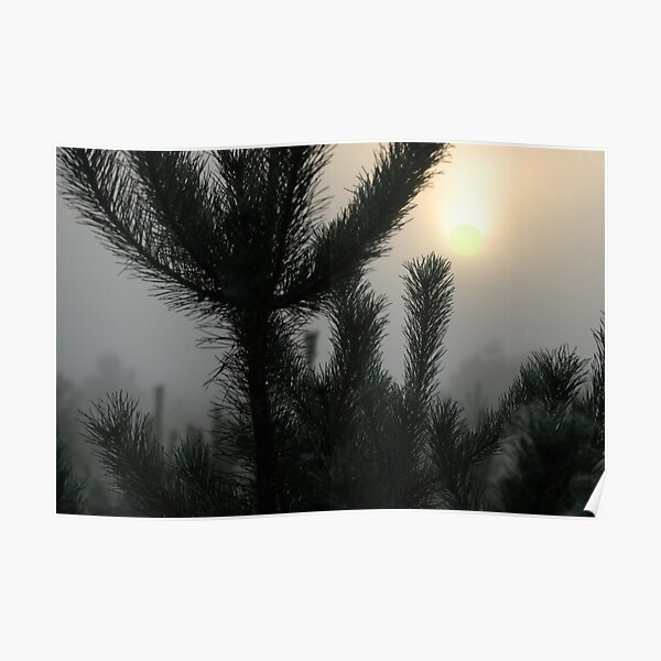 Sunrise from mist and pines Poster