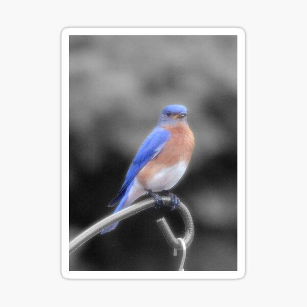 Bird on Feeder Sticker