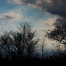 Kruger National Park, South Africa by Roger Barnes