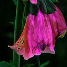 Nature's Dress Shop ! by Elfriede Fulda