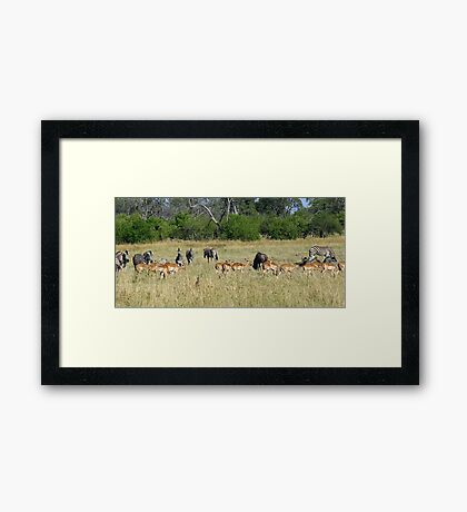 A classic african trio! Framed Print