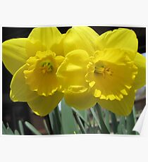 Two Daffodils - NYC - 4-11 Poster