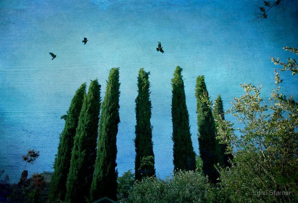 Cypress Trees with Crows by Lynn Starner