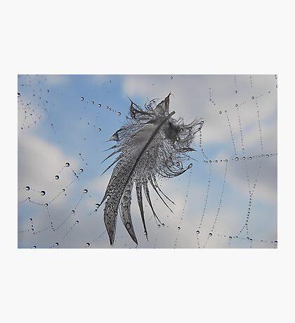 Captured Feather. Photographic Print