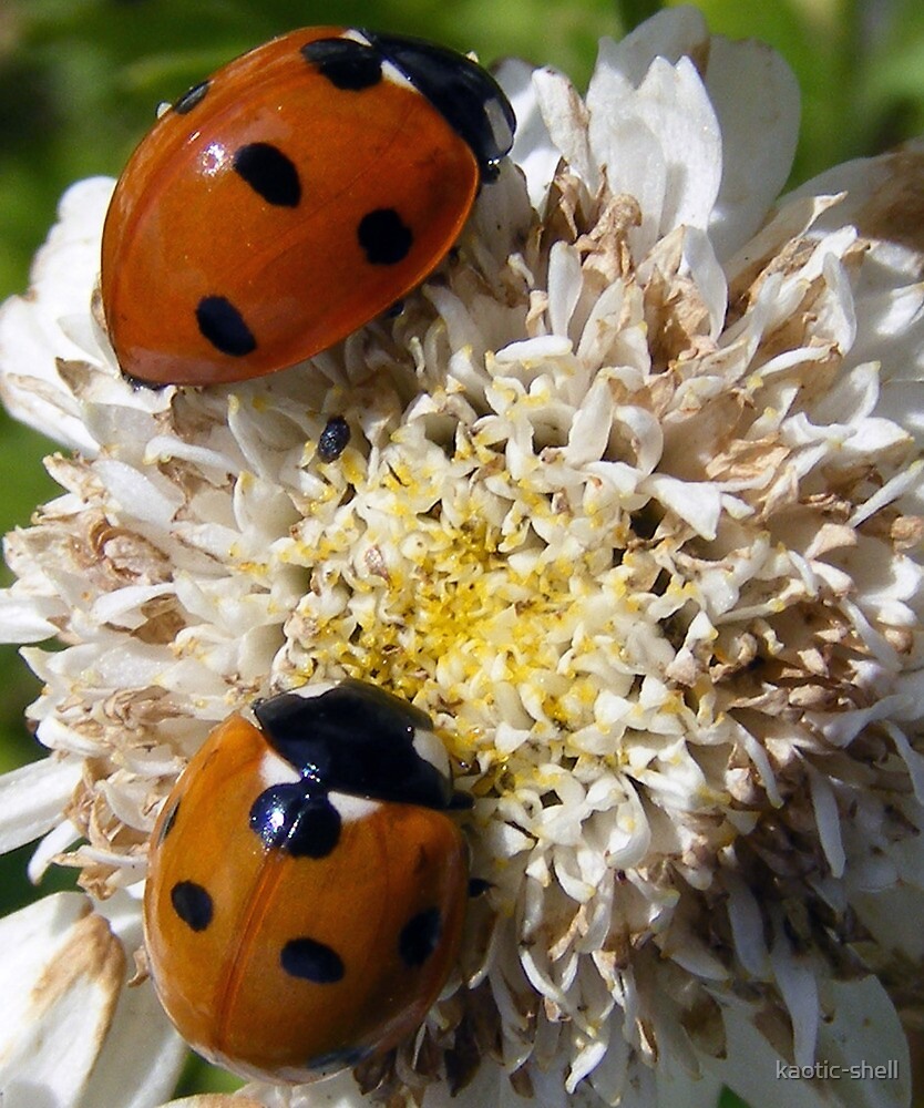 Ladybirds by kaotic-shell