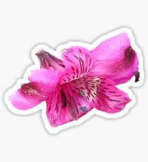 Beach Flower Sticker