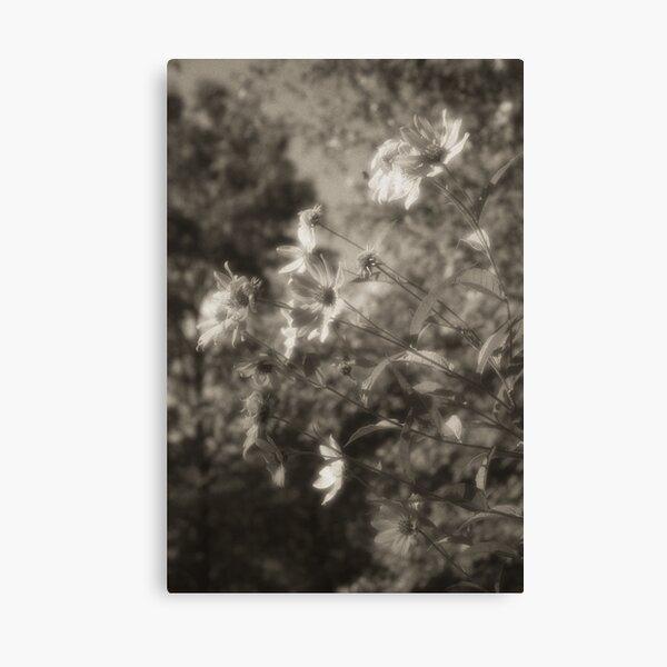 Facing west Lou Campbell Nature Preserve Canvas Print