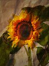 Sunshine by Carol Bleasdale