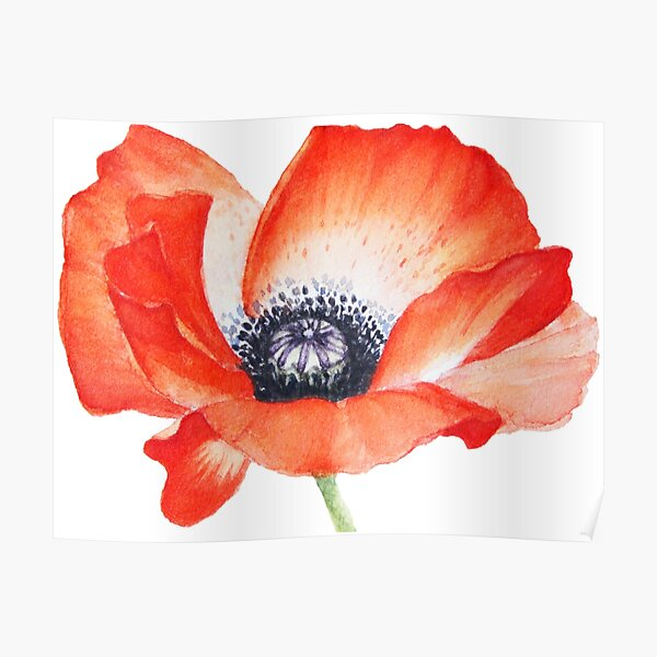 Red Poppy Seed Flower Watercolor Painting  Poster