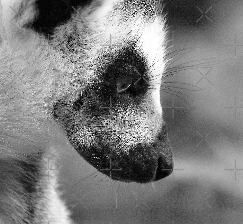 Dreaming of Madagascar by Yampimon