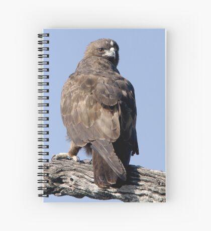 Juvenile Bataleur Eagle Spiral Notebook