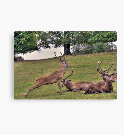 Stags Wollaton Park Canvas Print