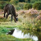 Horse grazing by pool by david marshall