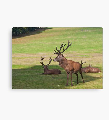 Daddy of them all Canvas Print