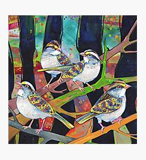 White-throated sparrows painting - 2012 Photographic Print