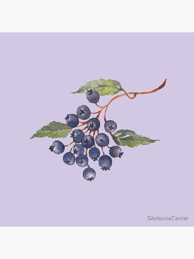 Watercolor blueberries by GloriannaCenter