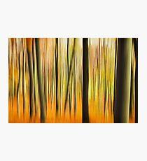 Autumn Forest Colors Photographic Print