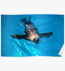 relaxing seal  Poster